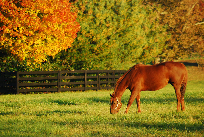 horse farms lexington kentucky