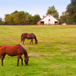 lexington horse farms