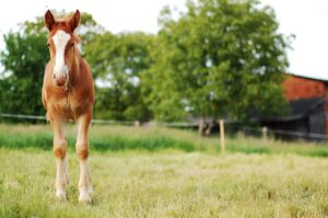 miniature horse farms for sale